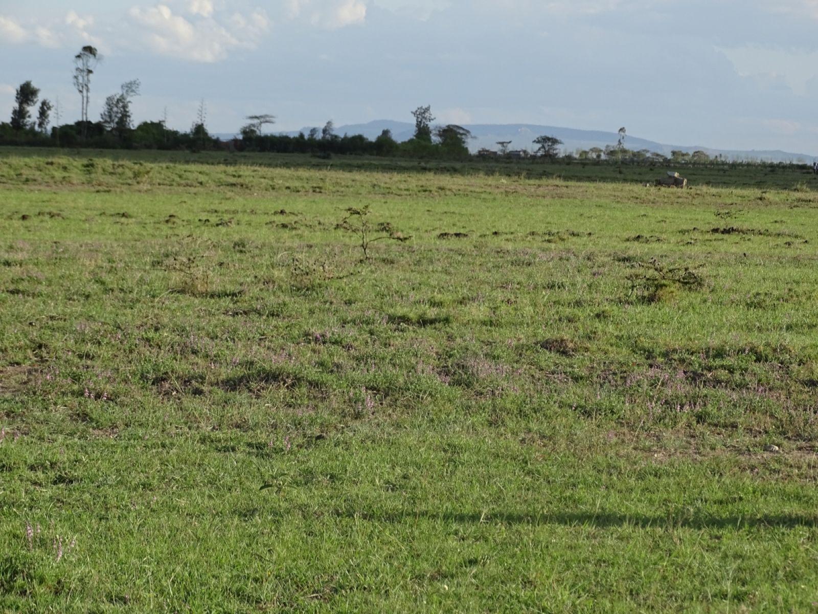 Gilgil Land for sale